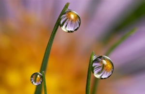 reflection in a drop of water